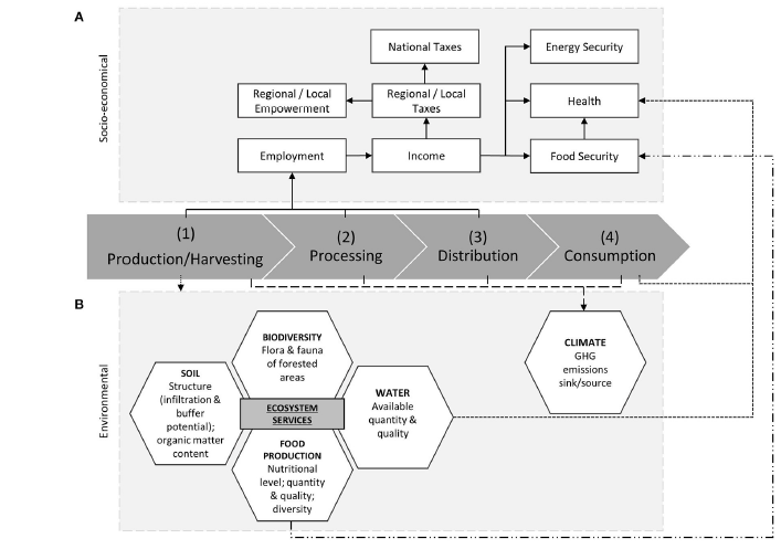 FIGURE 1 | Analytical framework for charcoal value chain assessment with focus on sustainability dimensions (A: socio-economical; B: environmental) and WEF nexus analysis (adapted from Peter and Sander, 2009).